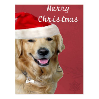 Golden Retriever Merry Christmas Postcard