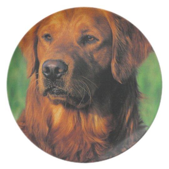 Golden Retriever plate