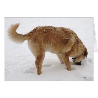 Golden Retriever Pup Snow - Ranch Dog Lover Blank Note Card