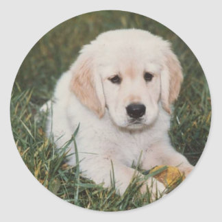 Golden Retriever Pup Sticker