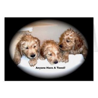 Golden Retriever Puppies in the Tub Card