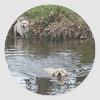 Golden Retriever Puppies Sticker