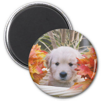 Golden Retriever Puppy Autumn Scene Magnet