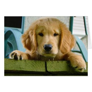 Golden Retriever Puppy Dog Canis Lupus Familiaris Card