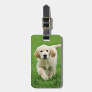 Golden retriever puppy luggage tag
