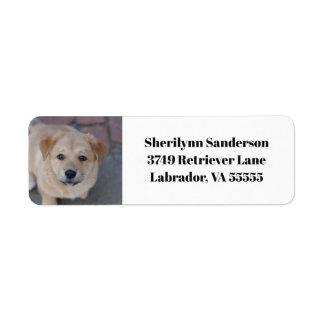 Golden Retriever Puppy Photograph Return Address Label