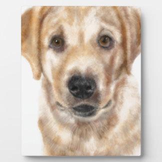 Golden retriever puppy plaque