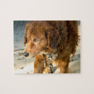 Golden Retriever Puzzle 1