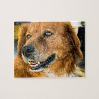 Golden Retriever Puzzle 2