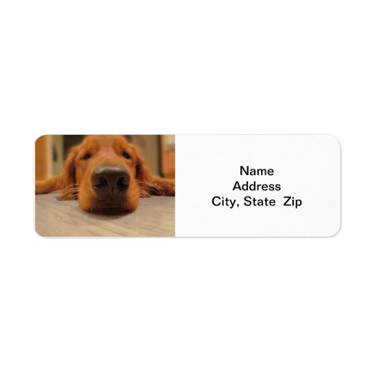 Golden Retriever Return Address Label,  Nose Return Address Label