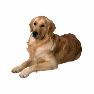 Golden Retriever Standing Photo Sculpture