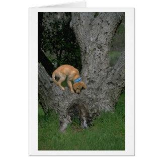 Golden Retriever Up A Tree Thank You Card