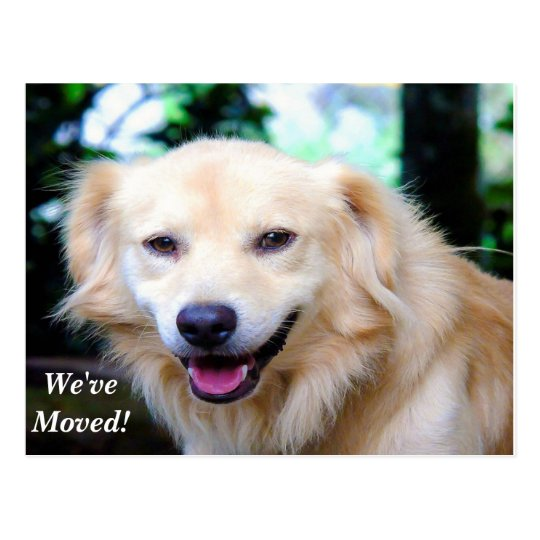 Golden Retriever We've Moved New Address Postcard