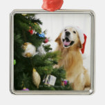 Golden retriever which watches Christmas tree Silver-Colored Square Decoration