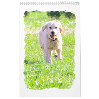 Golden retrievers calendars