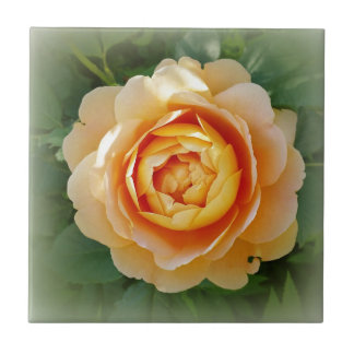 Golden rose small square tile