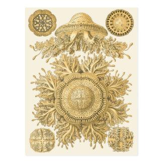 Golden Sea Creatures Postcard