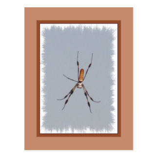 Golden Silk Orb-Weaver Postcard