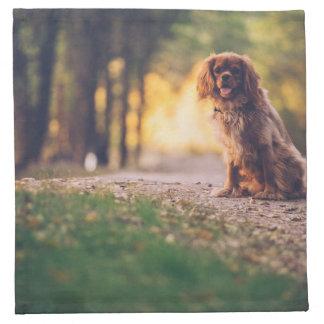 Golden Spaniel dog panting in the sun on path Napkin