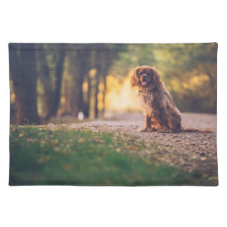 Golden Spaniel dog panting in the sun on path Placemat
