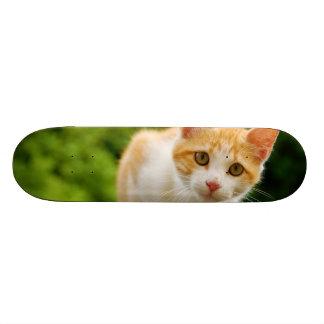 Golden Tabby and White Kitten Skateboards