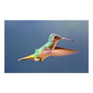 Golden Tailed Sapphire Hummingbird in Flight Photo Art
