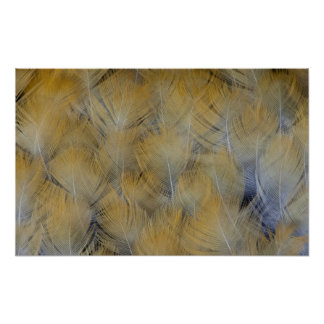 Golden Thrush Feather Abstract Poster