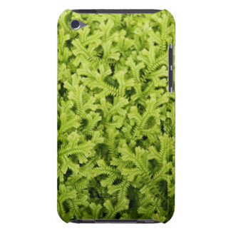 Golden Trailing Clubmoss Case-Mate iPod Touch Barely There iPod Covers