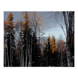 Golden Tree Tops Poster