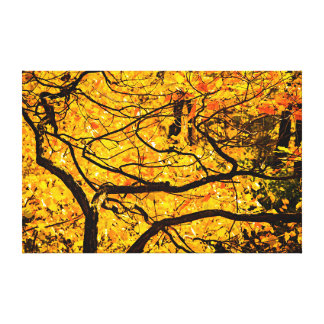 Golden Veins Of Autumn Gallery Wrapped Canvas
