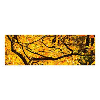 Golden Veins Of Autumn Art Photo