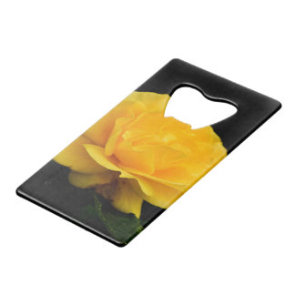 Golden Yellow Rose Isolated on Black Background