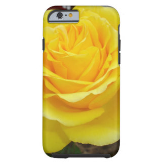 Golden Yellow Rose with Garden Background Tough iPhone 6 Case