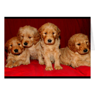 Goldendoodle Puppy Any Occasion Card