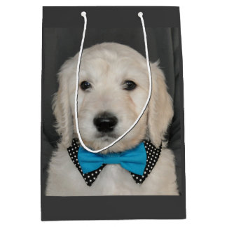 Goldendoodle puppy in bow tie gift bag