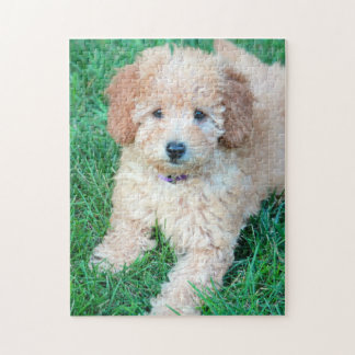Goldendoodle Puppy Puzzle