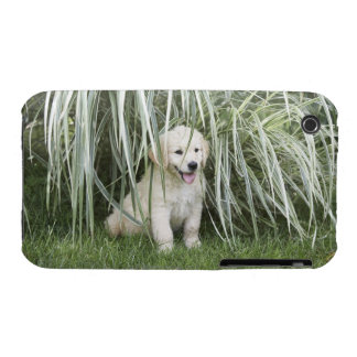 Goldendoodle puppy sitting under tall grasses iPhone 3 covers