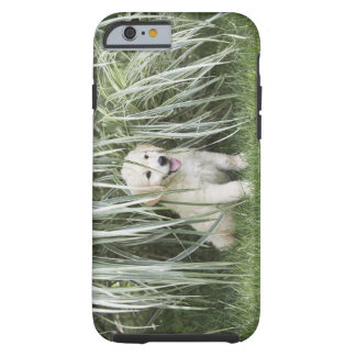 Goldendoodle puppy sitting under tall grasses tough iPhone 6 case