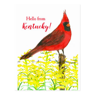 Goldenrod Cardinal Hello From Kentucky Postcard