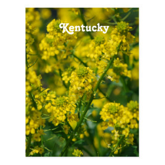 Goldenrod Postcard