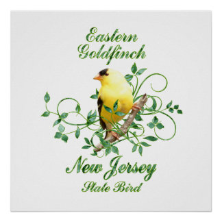 Goldfinch New Jersey State Bird Poster