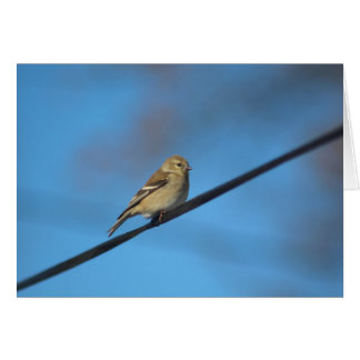 Goldfinch note card