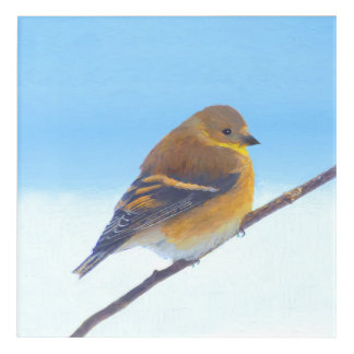 Goldfinch Painting - Original Bird Art