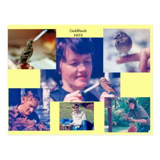 Goldfinch Story 1973 Postcard