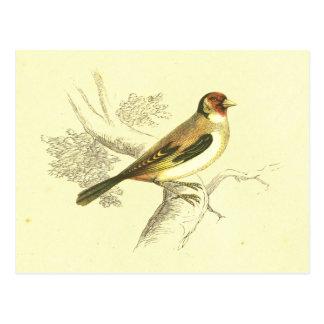 Goldfinch Vintage Bird Lithograph Postcard
