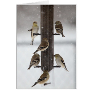 Goldfinches Greeting Card