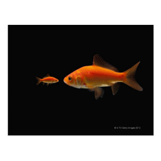 Goldfish 4 postcard