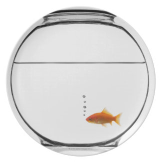 Goldfish in bowl plate