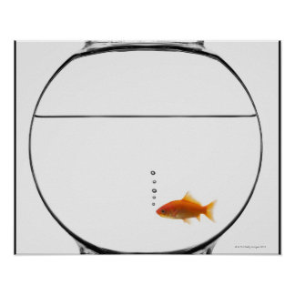 Goldfish in bowl poster