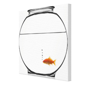 Goldfish in bowl stretched canvas print